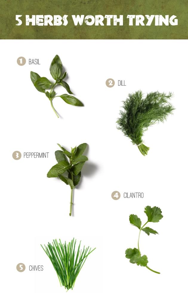herbstotry